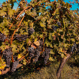 Calabria Ancient Land of Wine - Borghi Magazine